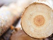 Лес кругляк,  пиловочник,  баланс дрова(хвойные породы)