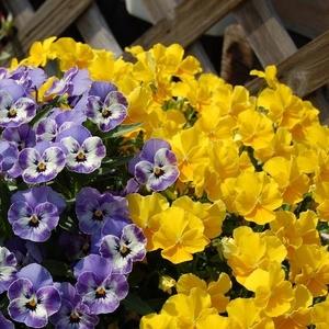 продажа многолетних растений  и саженцев декоративных кустарников